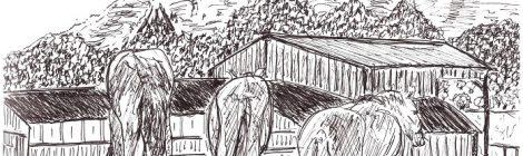 Un cheval en trois temps - dessin JTF