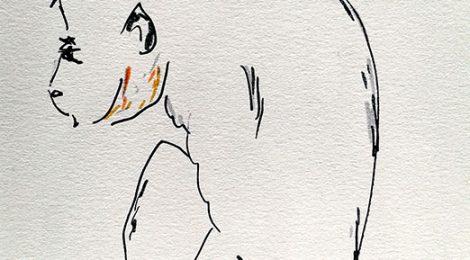 Petite singe - dessin JTF