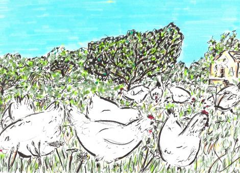 Les poules picorent