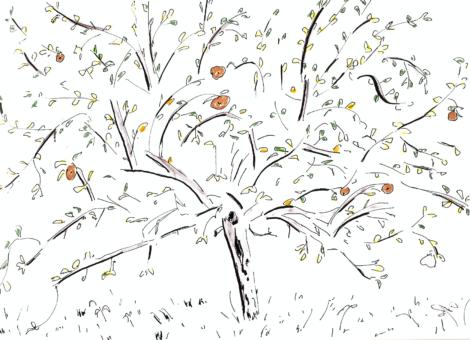 Le pommier (préparation tableau)