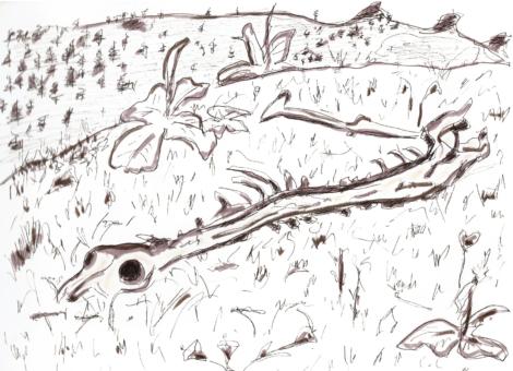 Une brebis, une vipère, 40 vautours, une minute, une carcasse
